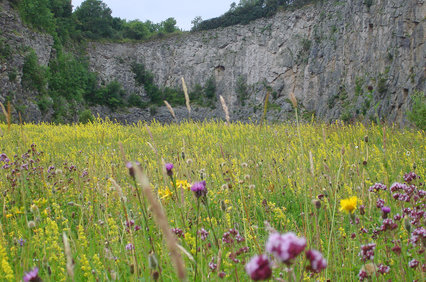 LT_wildflowers_in_warton_crag_quarry