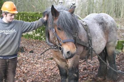 horse_logging
