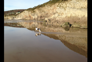 My dog on the sands