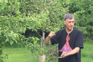 Peter in the orchard