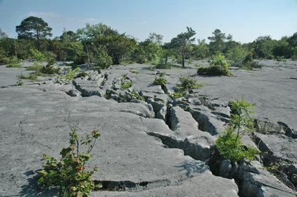 Gait Barrows Limestone Pavement