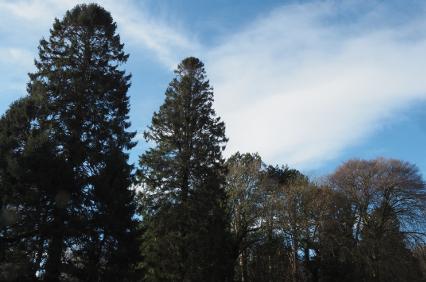 Arnside Cemetery trees