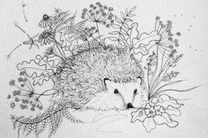 H the hedgehog