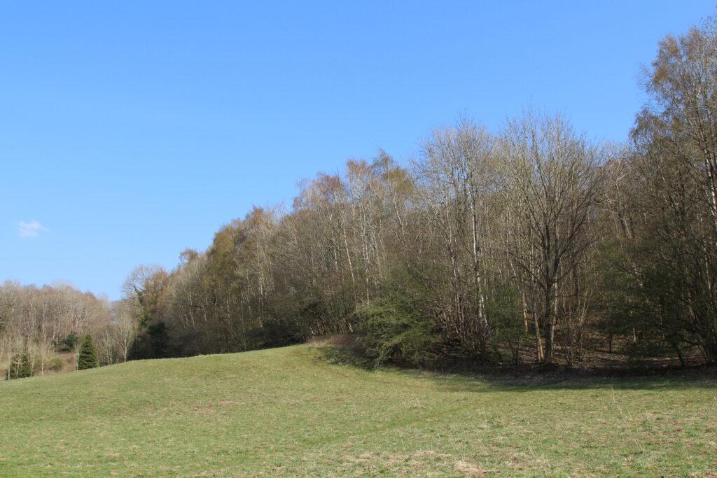Dobshall Wood Meadow