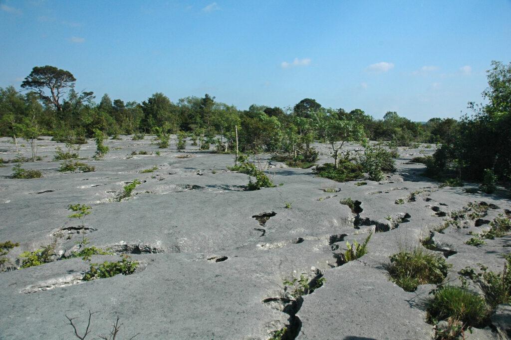 Limestone Pavement Gait Barrows John Reaney